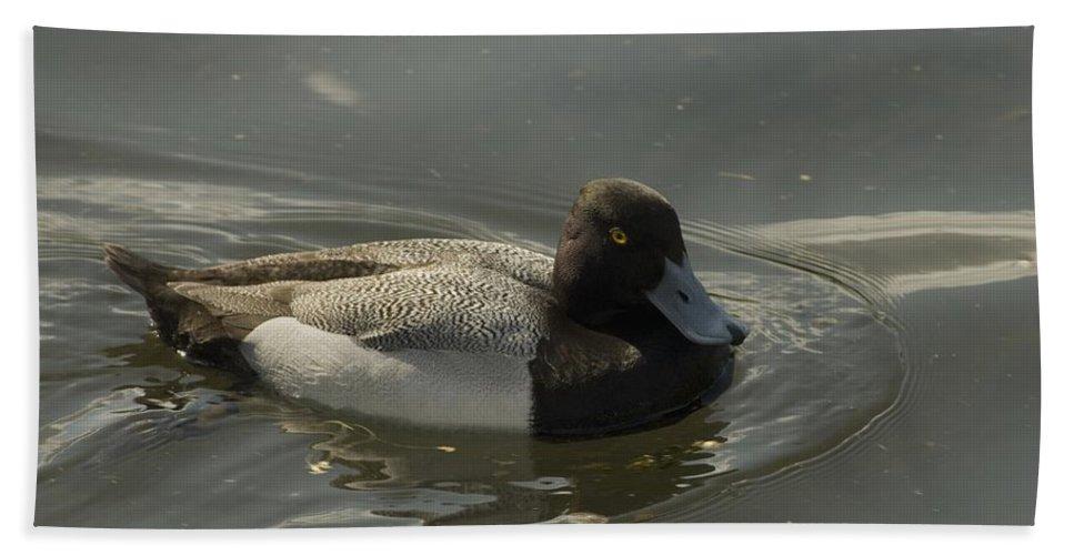 Diver Ducks Hand Towel featuring the photograph Blue Bill by Sara Stevenson