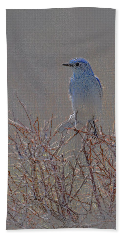 Colored Pencil Hand Towel featuring the photograph Blue Bird Colored Pencil by Heather Coen