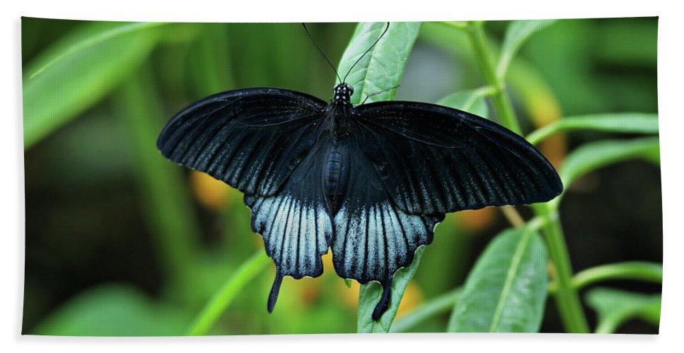 Butterfly Bath Sheet featuring the photograph Blue Butterfly II by Sandy Keeton