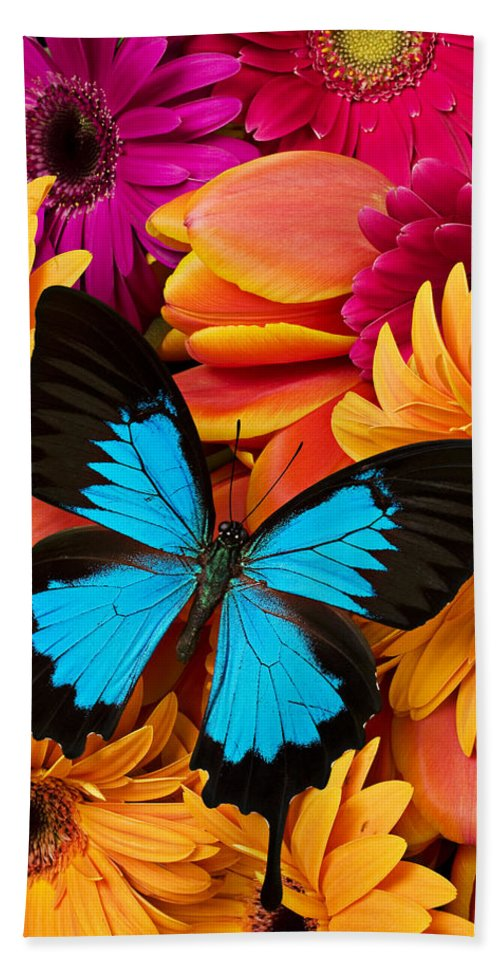 Butterfly Tulips Daisy�s Bath Towel featuring the photograph Blue Butterfly On Brightly Colored Flowers by Garry Gay