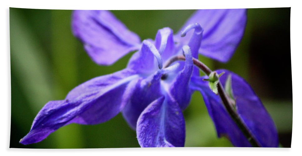 Columbine Hand Towel featuring the photograph Blue Columbine by Teresa Mucha