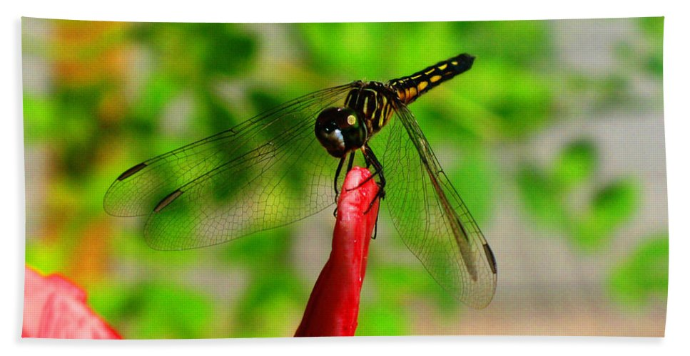 Damselfly Bath Sheet featuring the photograph Blue Dasher Damselfly by September Stone
