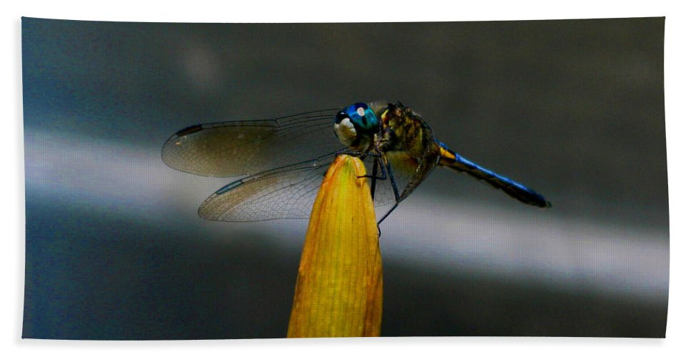 Dragonfly Bath Sheet featuring the photograph Blue Dhasher Dragonfly by September Stone