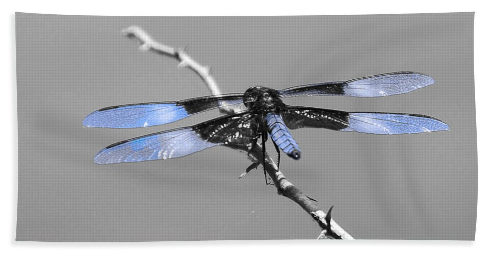 Bugs Bath Sheet featuring the photograph Blue Dragon by Cindy Manero