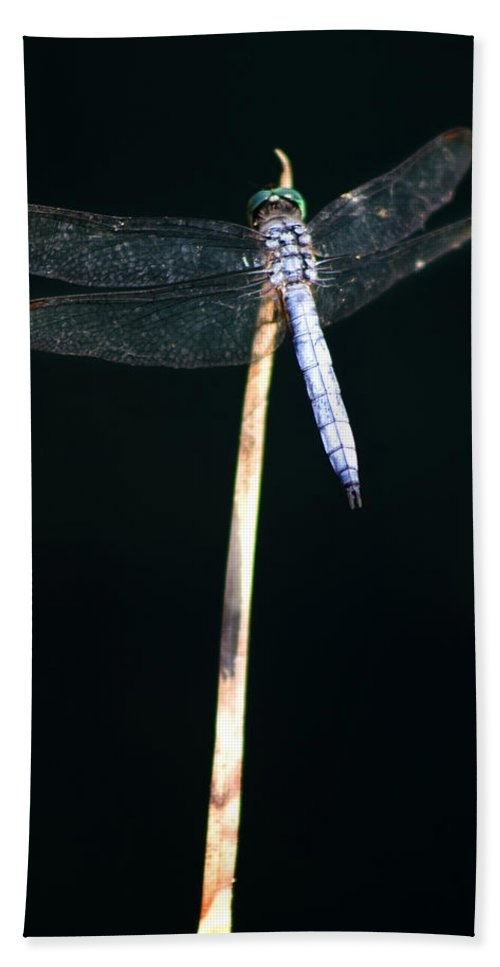 Dragonfly Bath Sheet featuring the photograph Blue Dragon On Stem by Chris Brannen
