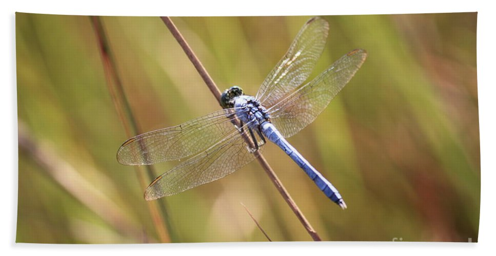 Dragonfly Hand Towel featuring the photograph Blue Dragonfly Against Green Grass by Carol Groenen
