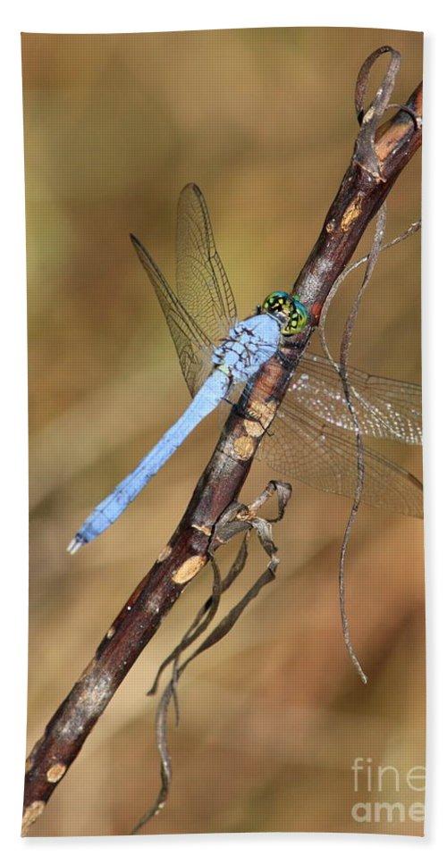 Dragonflies Bath Sheet featuring the photograph Blue Dragonfly Portrait by Carol Groenen
