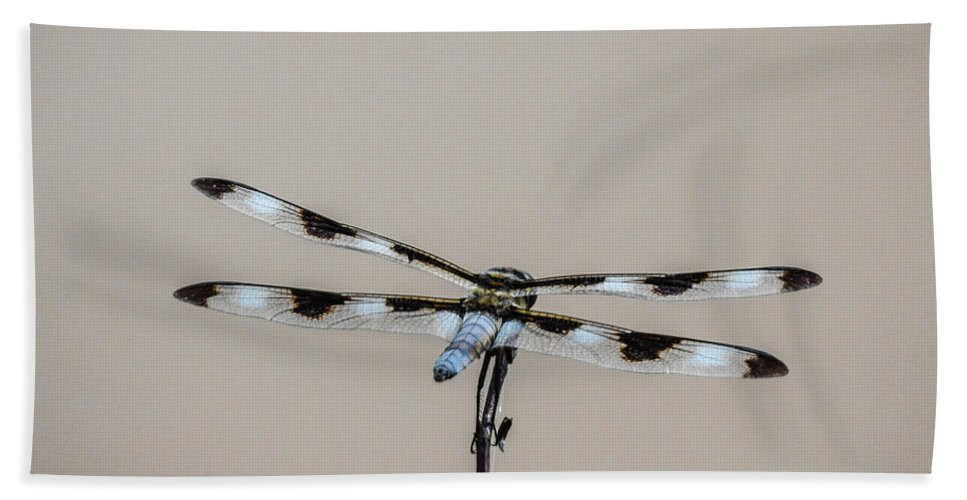 Blue Bath Sheet featuring the photograph Blue Dragonfly Resting by Mikel Classen
