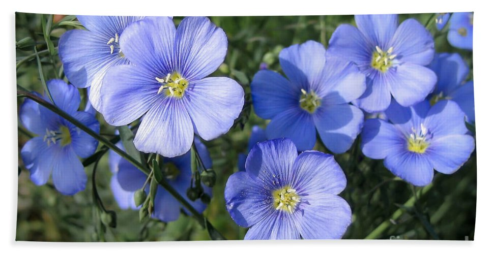 Flowers Bath Sheet featuring the photograph Blue Flowers In The Sun by Todd Blanchard