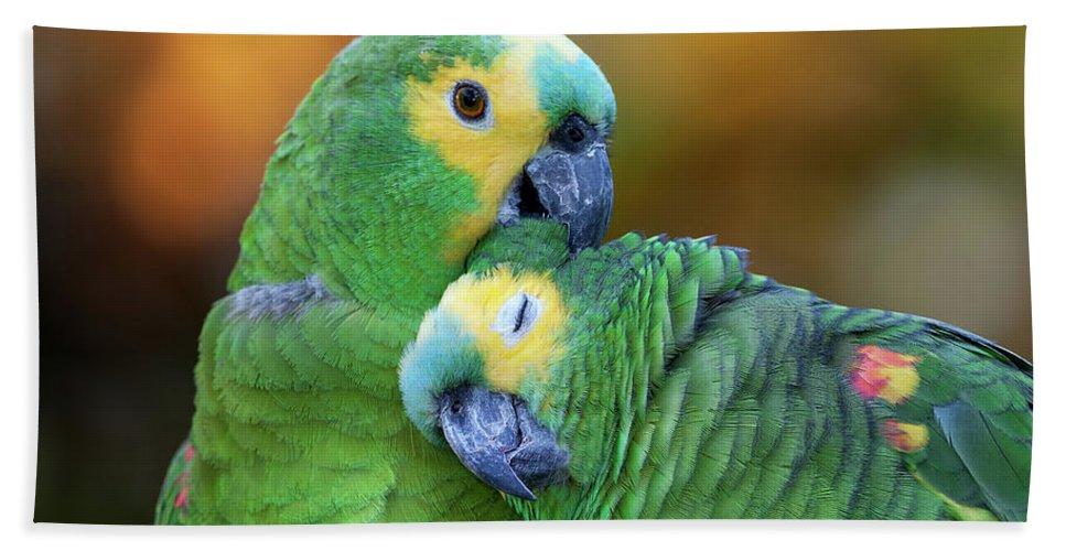 Blue Fronted Amazon Parrot Bath Towel For Sale By Pablo Rodriguez
