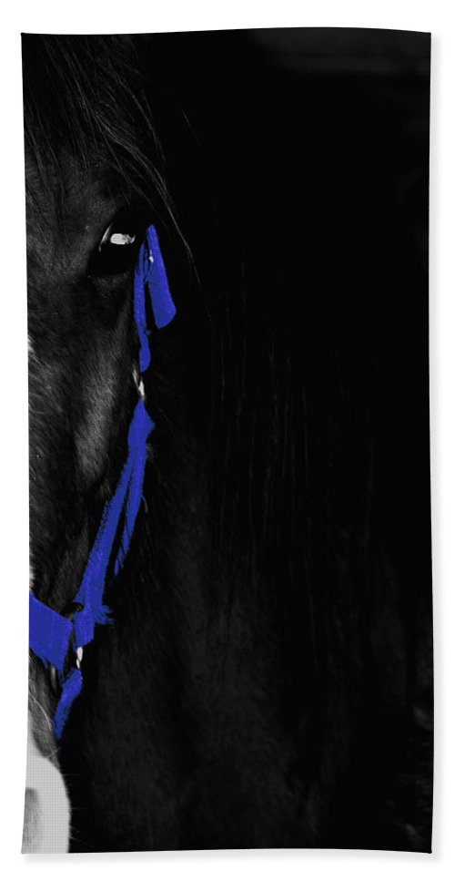 Horse Bath Sheet featuring the photograph Blue Halter by Hannah Breidenbach