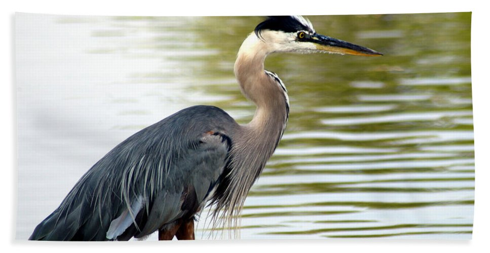 Clay Hand Towel featuring the photograph Blue Heron by Clayton Bruster