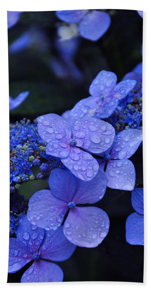 Flowers Bath Towel featuring the photograph Blue Hydrangea by Noah Cole