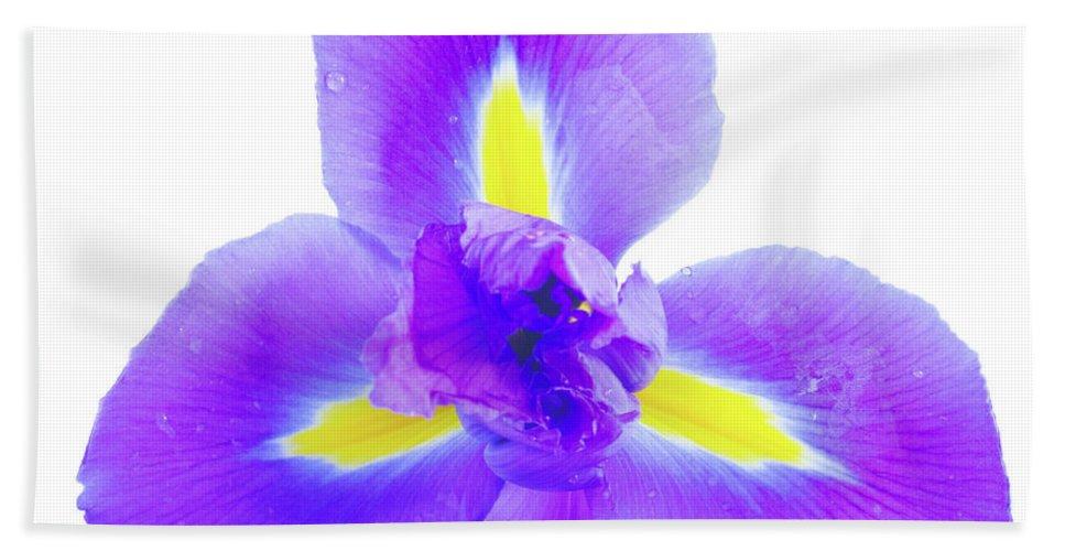 Iris Hand Towel featuring the photograph Blue Iris Flower by Anastasy Yarmolovich