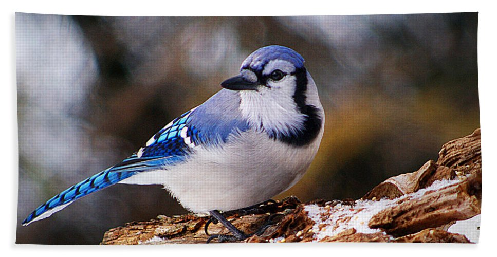 Birds Hand Towel featuring the photograph Blue Jay Day by Arthur Miller