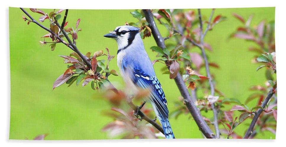 Bird Bath Sheet featuring the photograph Blue Jay by Deborah Benoit