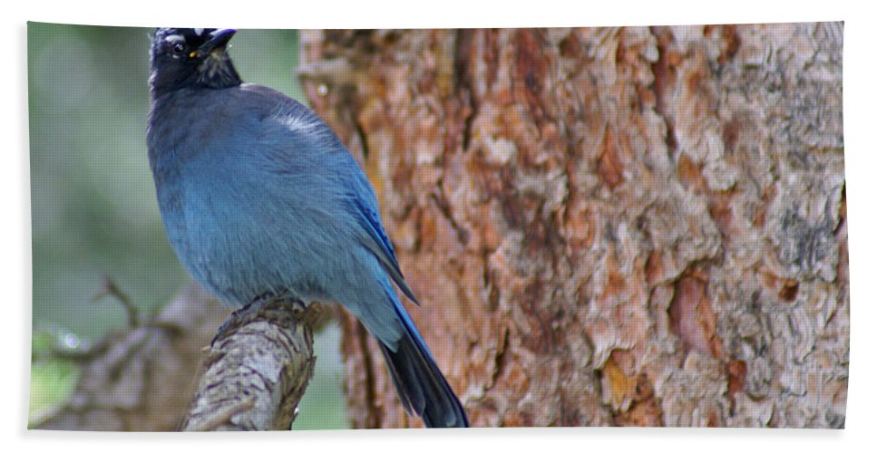 Blue Jay Bath Towel featuring the photograph Blue Jay by Heather Coen