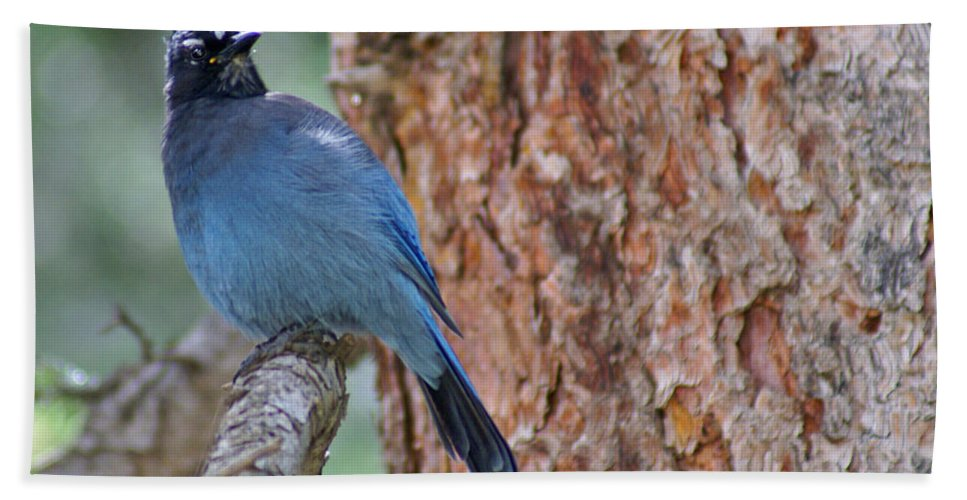 Blue Jay Hand Towel featuring the photograph Blue Jay by Heather Coen