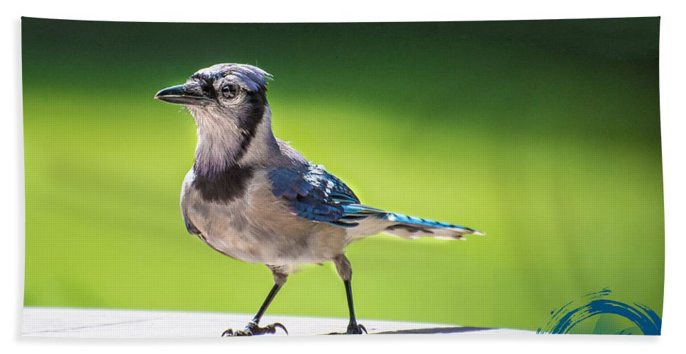 Blue Jay Hand Towel featuring the photograph Blue Jay Walk by James Hennis