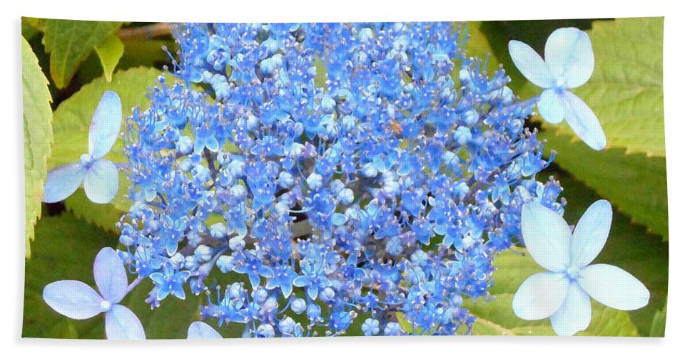Blue Lacecap Hydrangeas Hand Towel featuring the photograph Blue Lacecap Hydrangeas by Kume Bryant