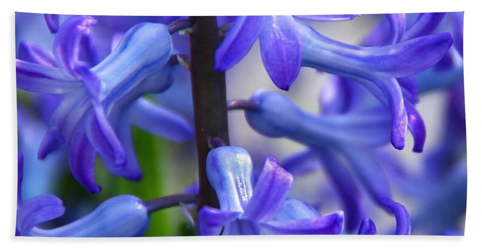 Blue Hyacinth Bath Sheet featuring the photograph Blue Rhapsody by Byron Varvarigos