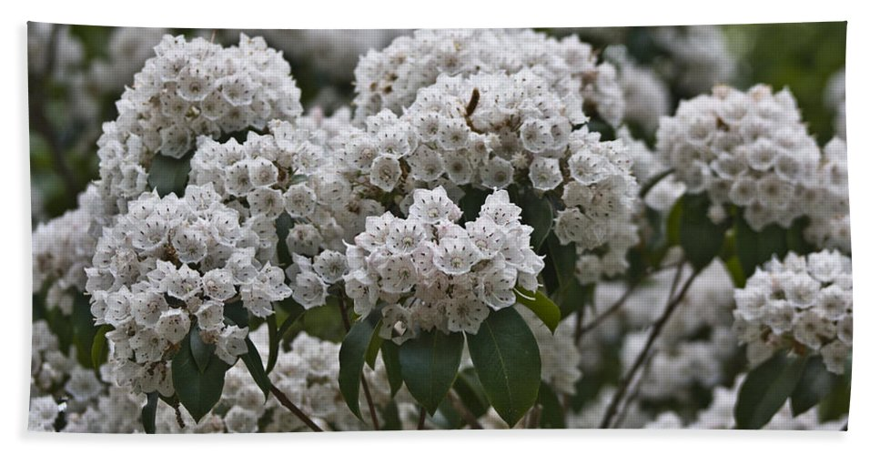 Kalmia Bath Towel featuring the photograph Blue Ridge Mountain Laurel by Teresa Mucha