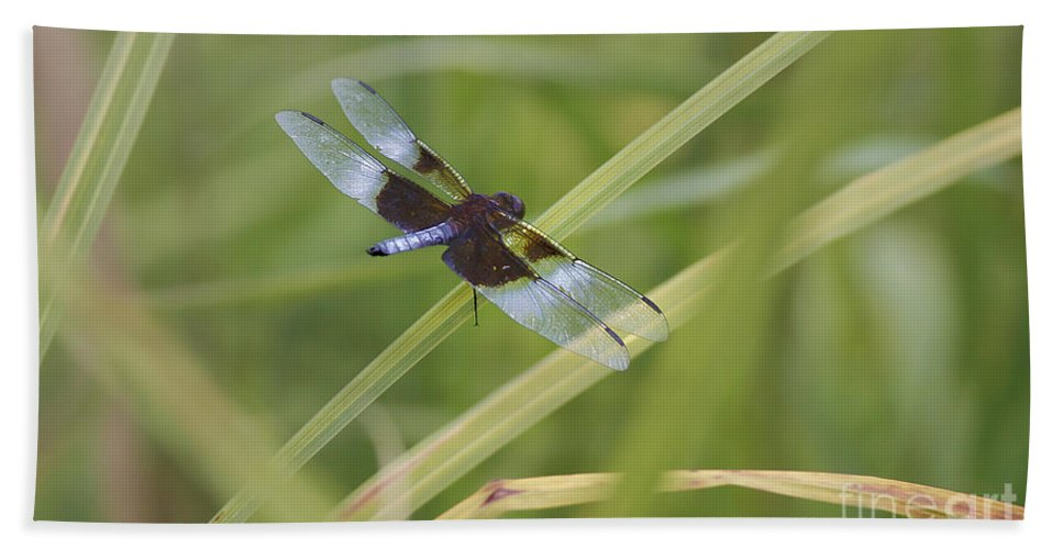 Dragonfly Hand Towel featuring the photograph Blue Shimmer by Deborah Benoit