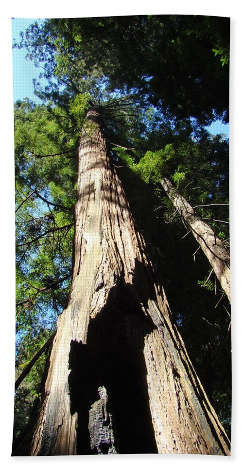 Redwood Bath Towel featuring the photograph Blue Sky Big Redwood Trees Forest Art Prints Baslee Troutman by Baslee Troutman