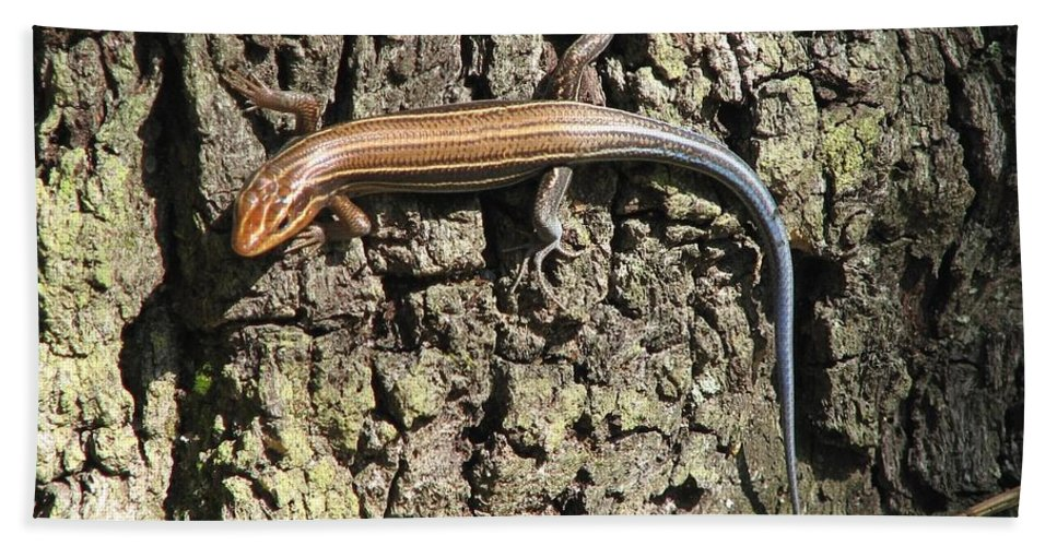 Blue Tailed Skink Hand Towel featuring the photograph Blue Tailed Skink by J M Farris Photography