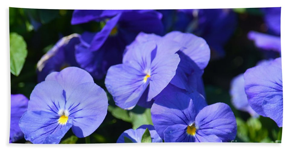 Blue Violets Hand Towel featuring the photograph Blue Violets by Maria Urso