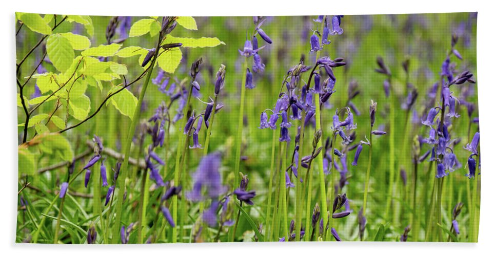 Judy Woods Bath Towel featuring the photograph Bluebells In Judy Woods by Mike Walker