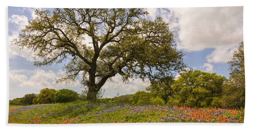 Bluebonnet Bath Towel featuring the photograph Bluebonnets Paintbrush And An Old Oak Tree - Texas Hill Country by Brian Harig