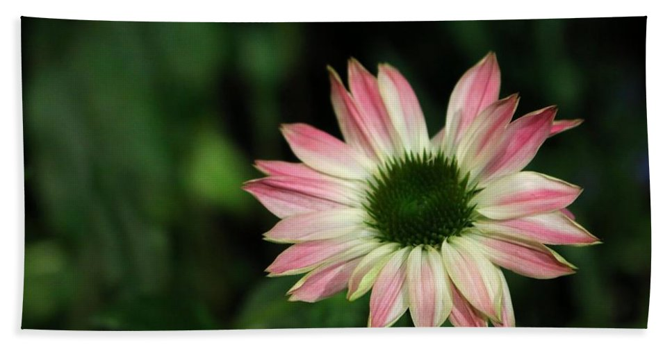 Floral Hand Towel featuring the photograph Blushing Tips by Living Color Photography Lorraine Lynch