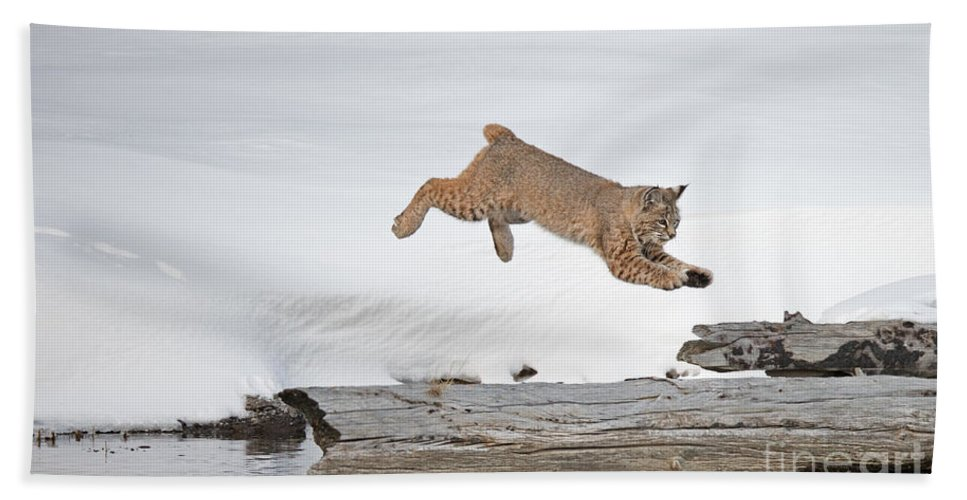 Bobcat Bath Sheet featuring the photograph Bobcat by Jim Chagares