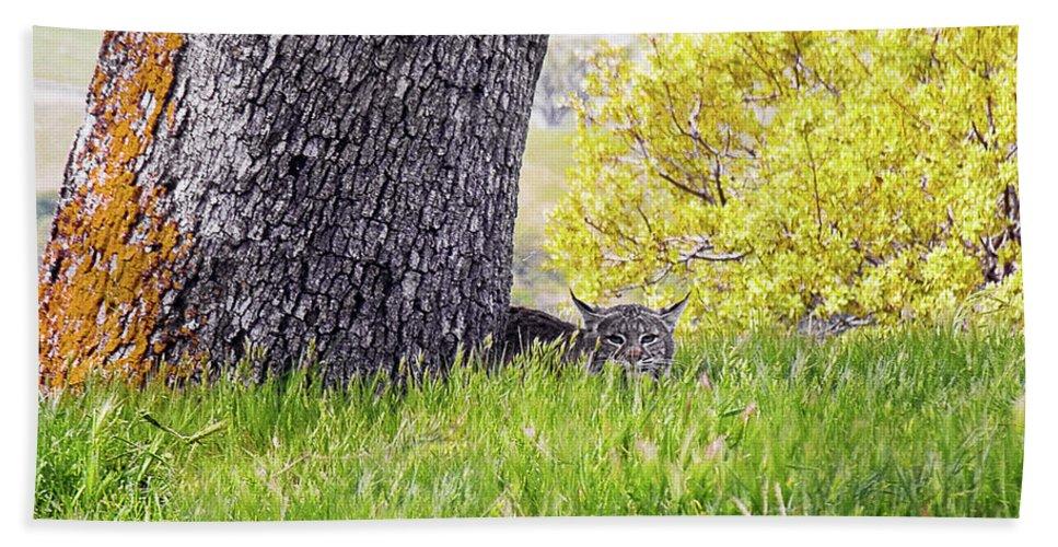Landscape Hand Towel featuring the photograph Bobcat Watch by Karen W Meyer