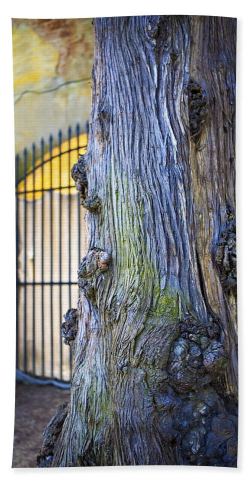 Boboli Hand Towel featuring the photograph Boboli Garden Ancient Tree by Marilyn Hunt