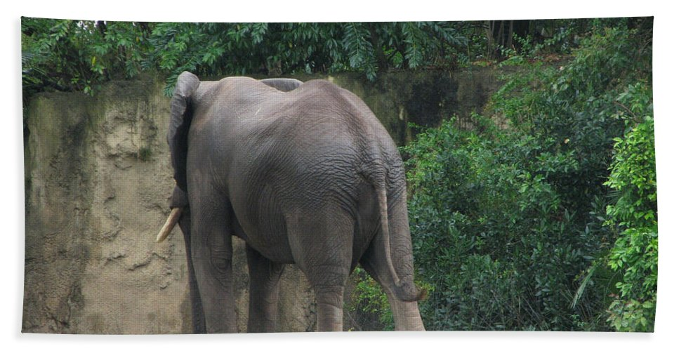 Elephant Hand Towel featuring the photograph Body Language II by Stacey May