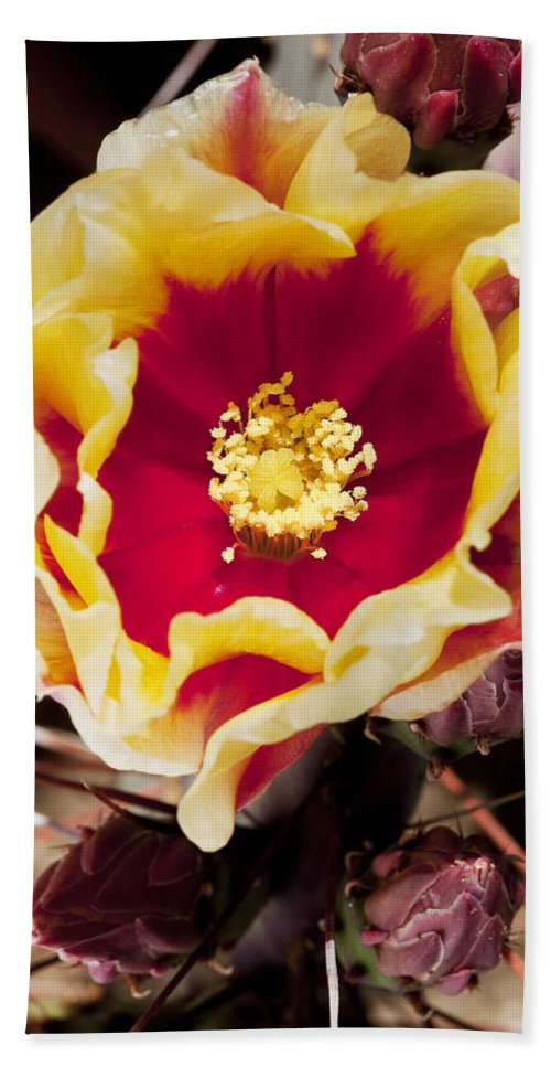 Prickly Pear Hand Towel featuring the photograph Bold And Beautiful by Kelley King