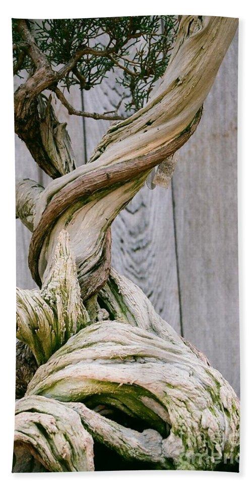 Tree Bath Towel featuring the photograph Bonsai by Dean Triolo
