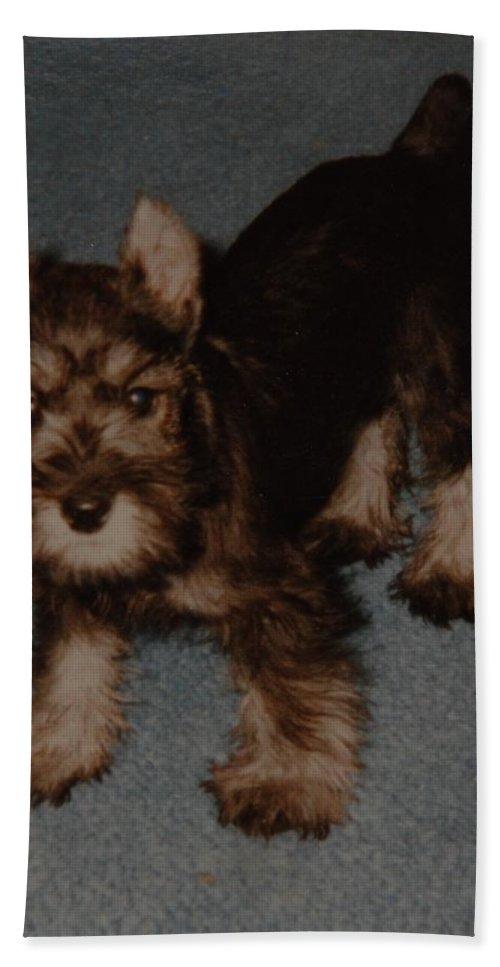 Dog Bath Sheet featuring the photograph Boo Boo by Rob Hans