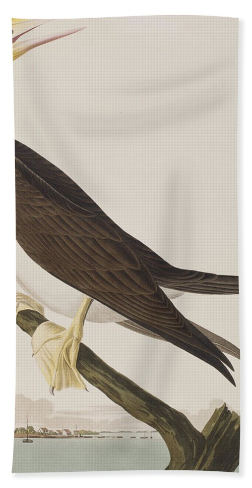 Booby Hand Towel featuring the painting Booby Gannet  by John James Audubon