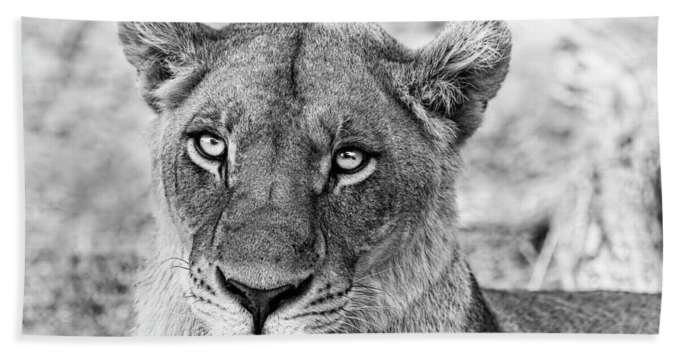 Lioness Hand Towel featuring the photograph Botswana Lioness In Black And White by Kay Brewer