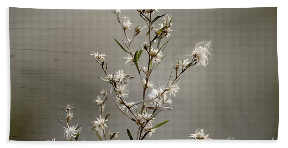 Wildflower Bath Sheet featuring the photograph Botswana Wildflower by Kay Brewer