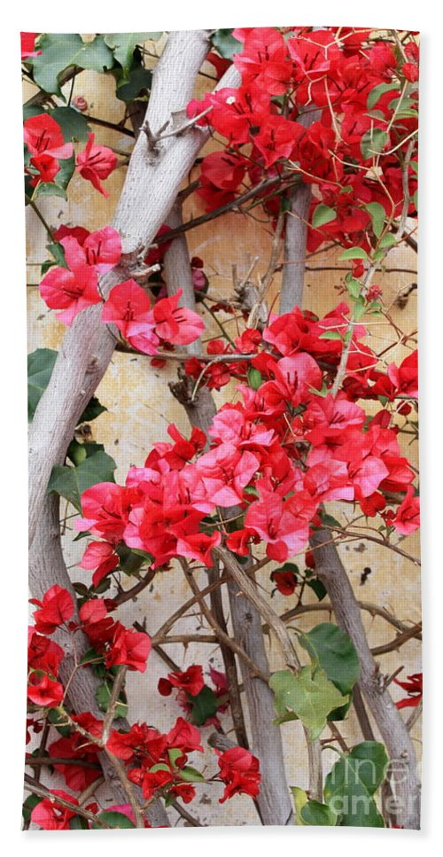 Bougainvilla Hand Towel featuring the photograph Bougainvillea by Carol Groenen