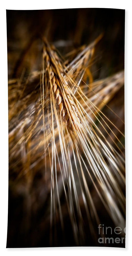 Agriculture Hand Towel featuring the photograph Bounty Of Barley by Venetta Archer