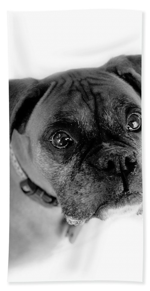 Boxer Bath Towel featuring the photograph Boxer Dog by Marilyn Hunt