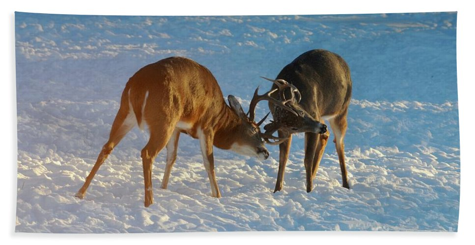 White Tailed Deer Bath Towel featuring the photograph Boys Will Be Boys by Sandra Updyke