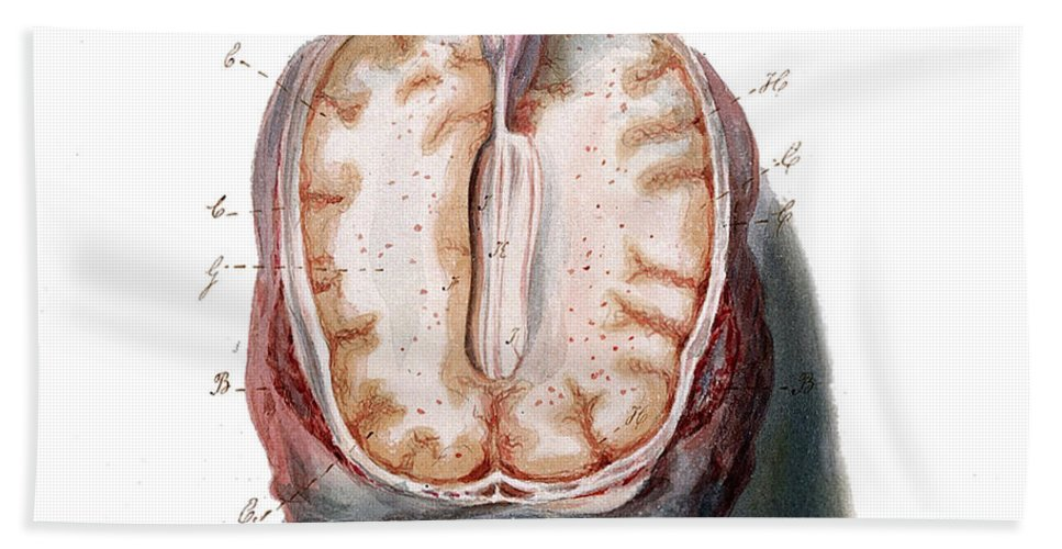 Historic Hand Towel featuring the photograph Brain, Anatomical Illustration, 1802 by Wellcome Images