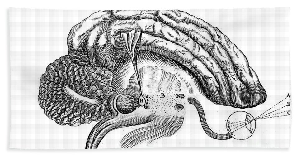 Historic Hand Towel featuring the photograph Brain And Eye, Descartes, Illustration by Wellcome Images
