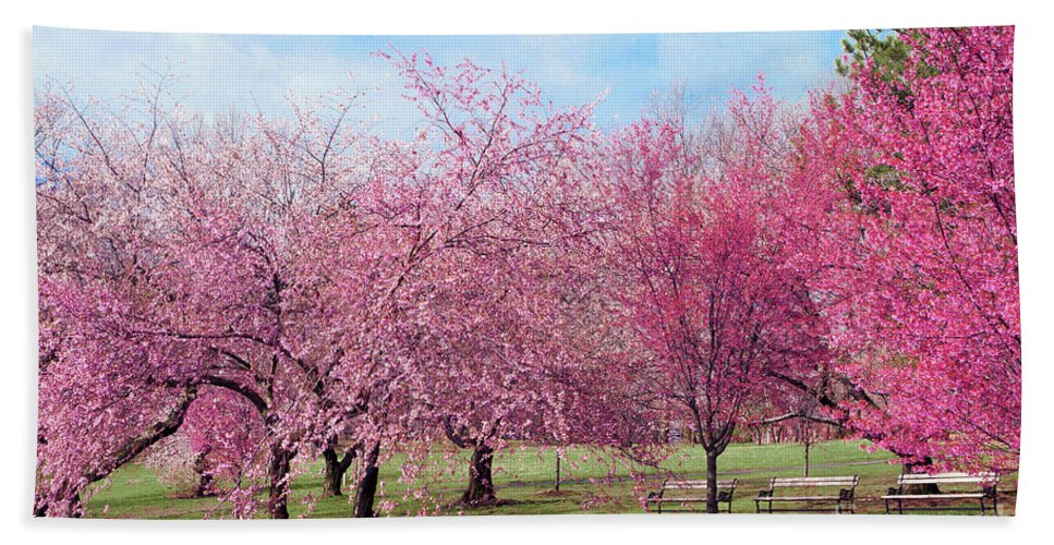 Branch Brook Park Cherry Blossoms 2013 Hand Towel featuring the photograph Branch Brook Cherry Blossoms by Regina Geoghan